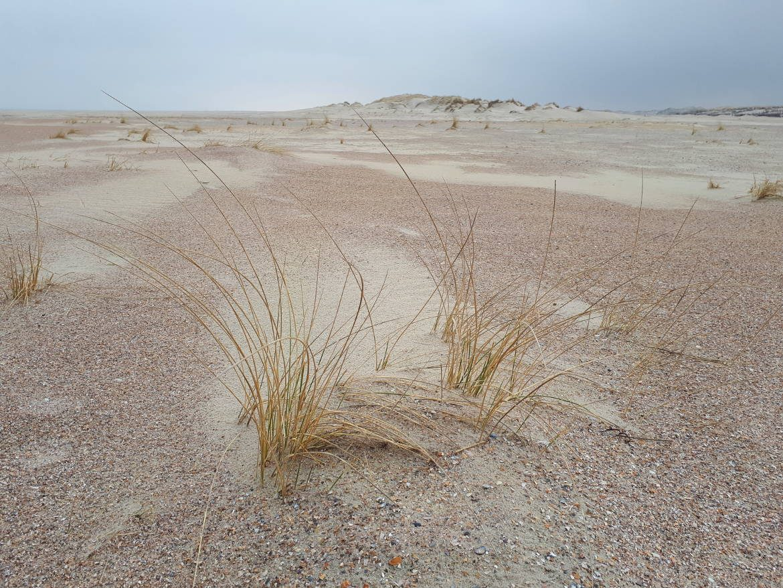Norderneys schönste Wanderung: Zum Wrack an der Ostspitze der Insel