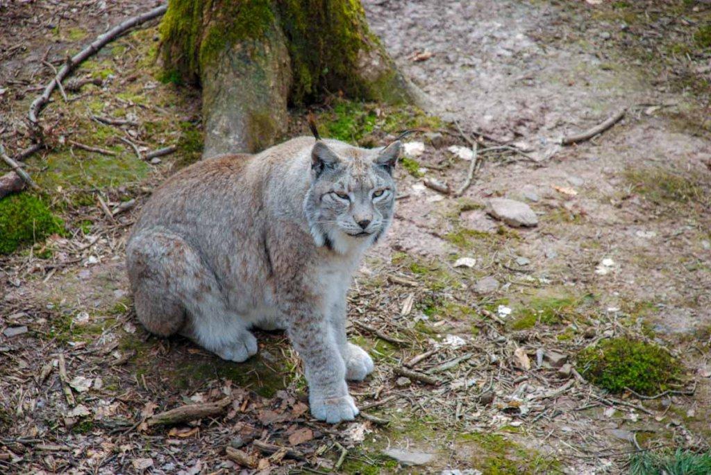 Ausflugsziel Baden-Württemberg: Der Wildpark Pforzheim