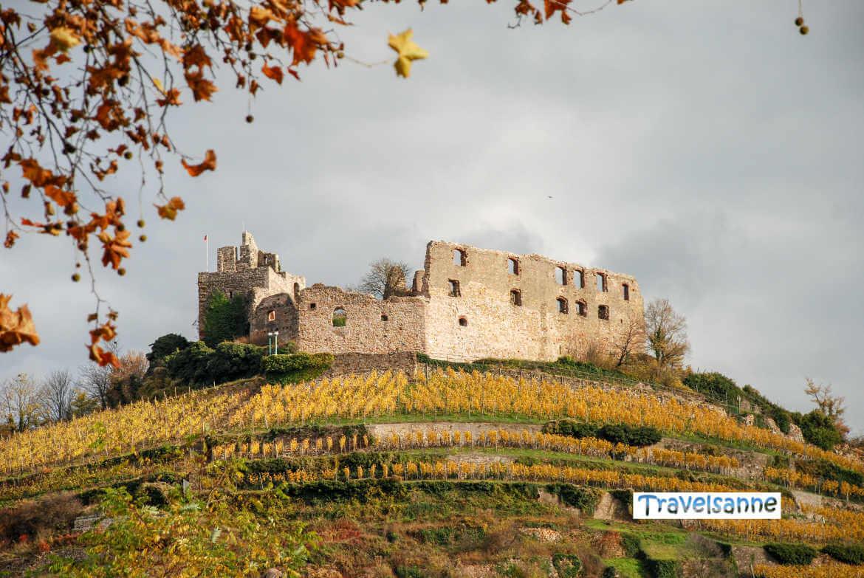Blick über die herbstlichen Weinberge auf die Burgruine Staufen