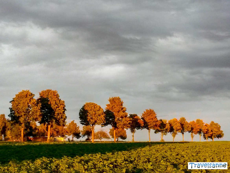 Baumallee auf der Schwäbischen Alb im Licht der untergehenden Herbstsonne