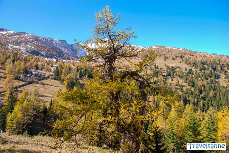 Herbstwanderung am Katschberg in Österreich