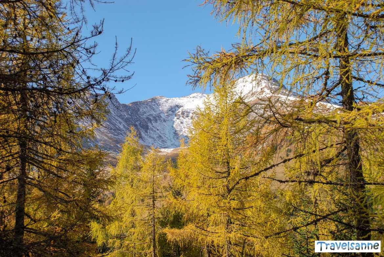Herbstlicher Lärchenwald am Katschberg in Österreich