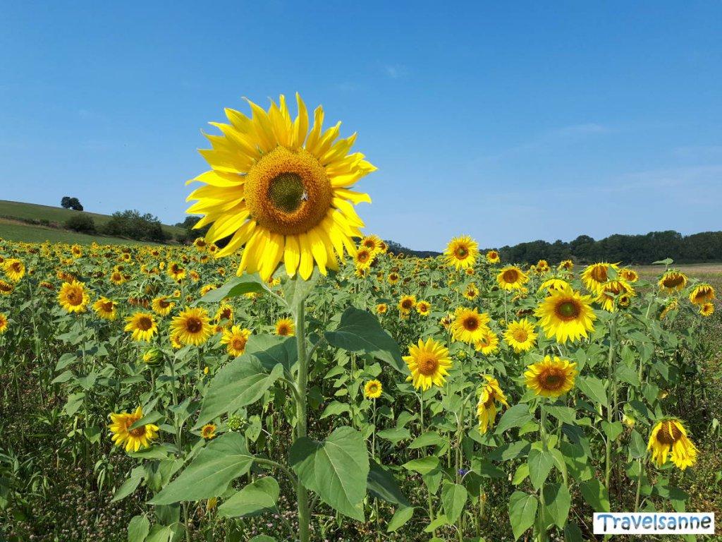 Sommer auf der Schwäbischen Alb