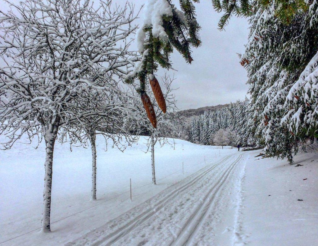 Entlang tiefverschneiter Wälder geht es auf der Sonnenbühler Golfplatz-Loipe