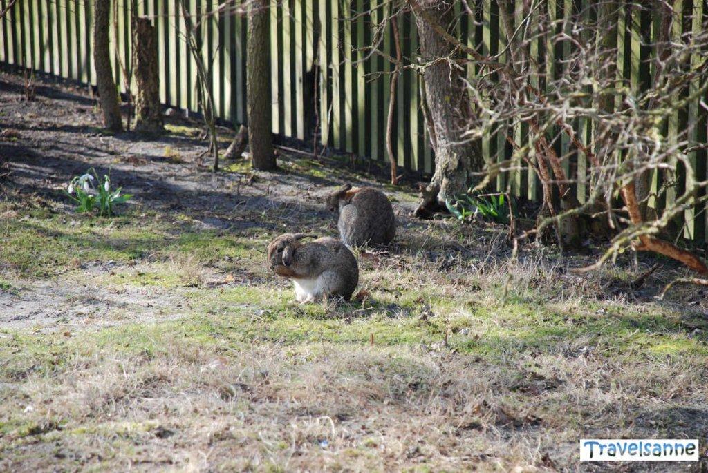 Osterhasen in allen Gärten auf Norderney