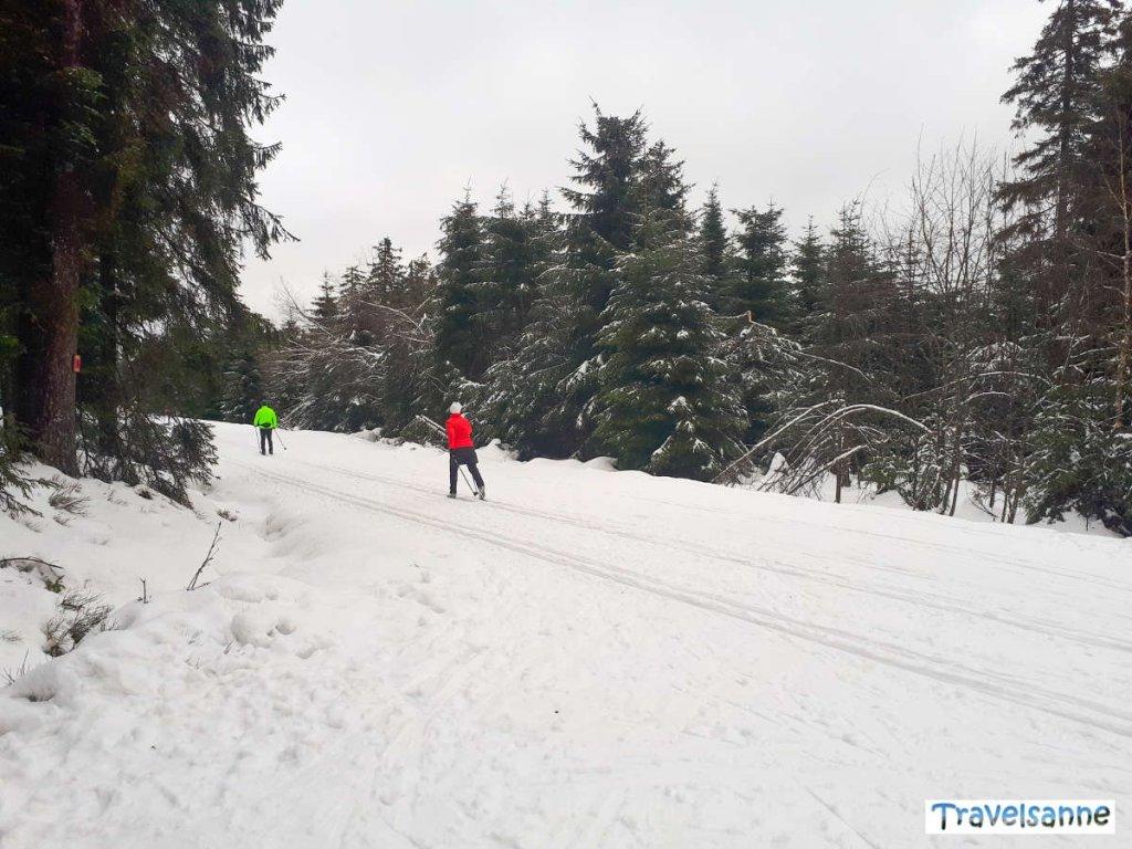 Langlaufen am Kaltenbronn im Schwarzwald