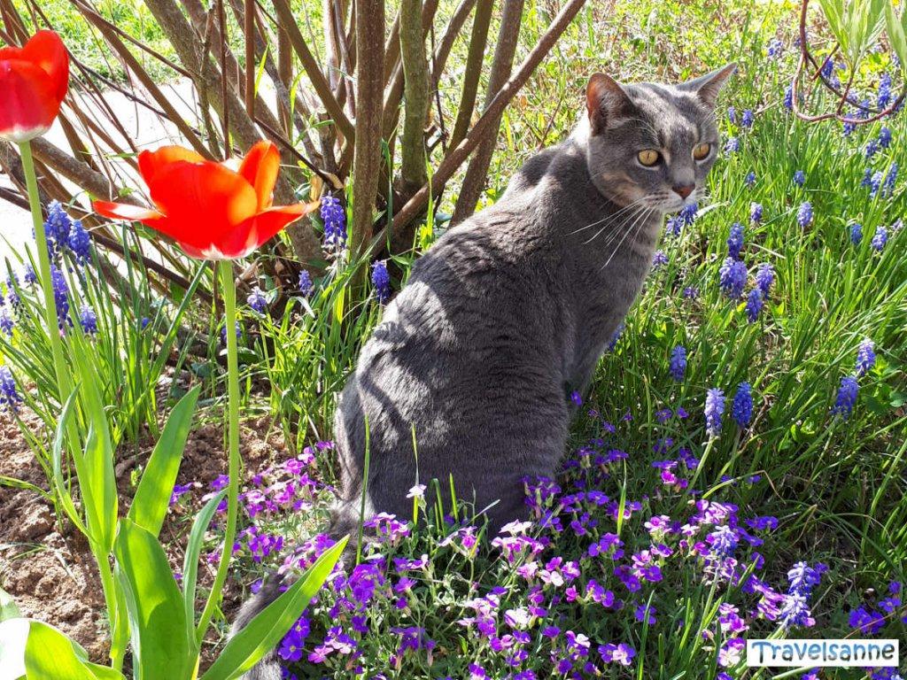 Katze im Frühlingsgarten