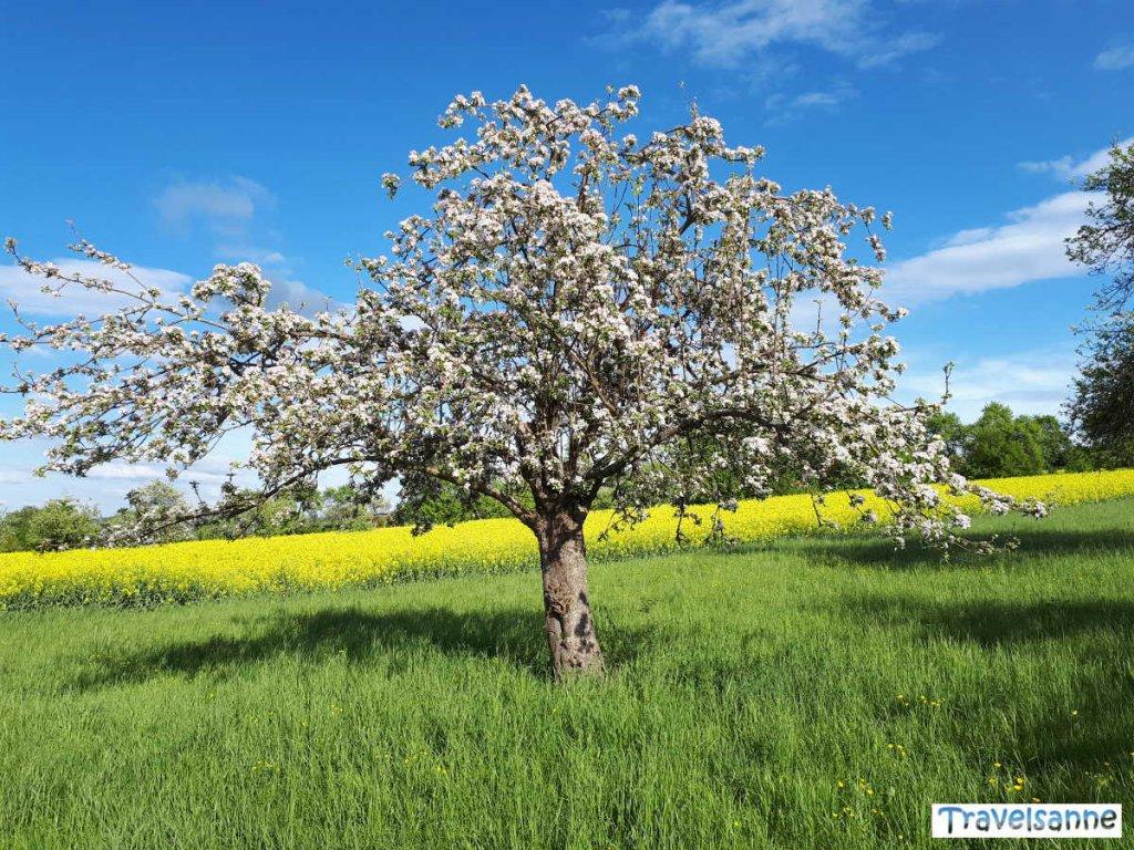 Baden-Württembergs Streuobstwiesen im Frühling