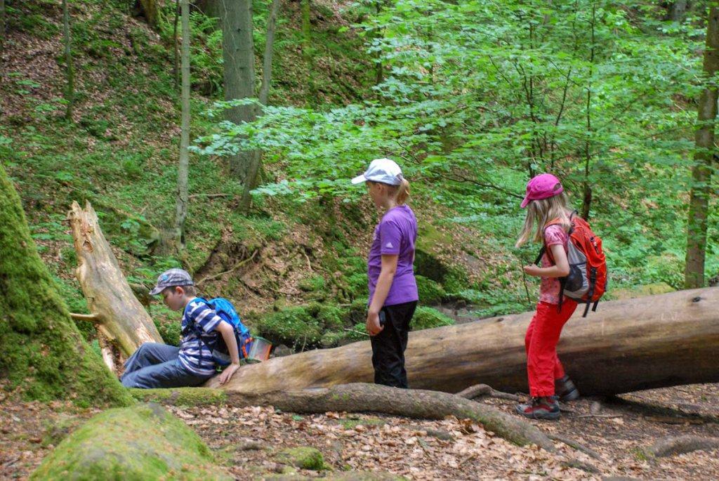 Mikroabenteuer für Kinder: Naturerlebnis Schwarzwald