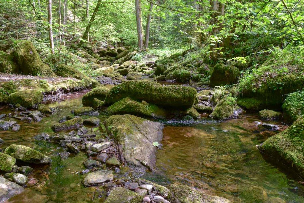 Wandern Nordschwarzwald: Die Monbachtal Wanderung