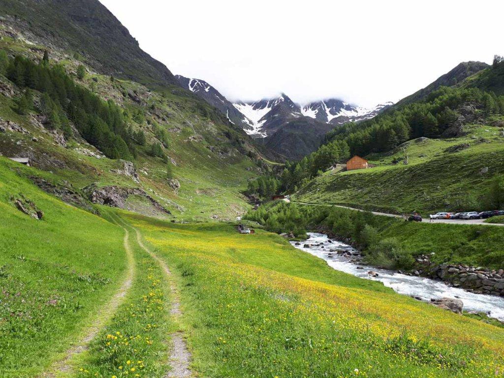 Almwiesen auf dem Weg zur Passhöhe des Timmelsjochs