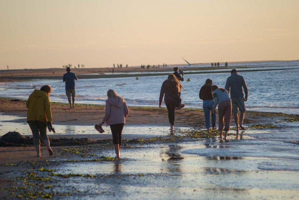 Die ganze Familie beim Strandspaziergang in Zeeland