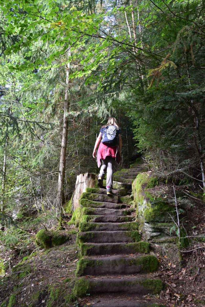 Auf ausgetretenen Pfaden durch den Nordschwarzwald wandern