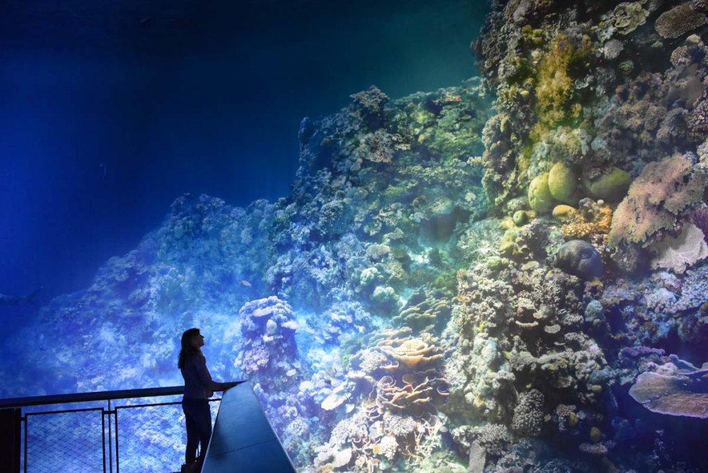 Atemberaubend: Blick auf das Great Barrier Reef von der Besucherplattform des Gasometers