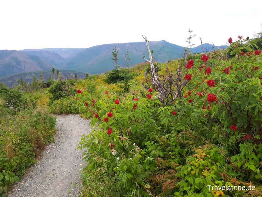 Wandern in den Chic-Choc Mountains im Gaspésie Nationalpark/Québec