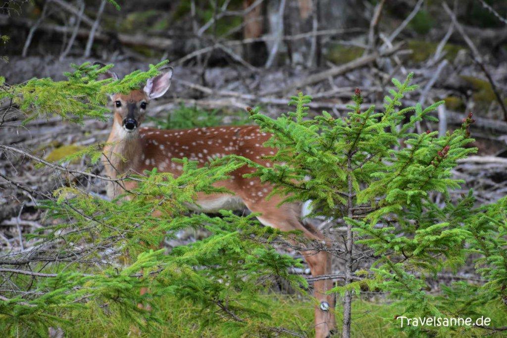 Tierbeobachtung im Kejimkujik Nationalpark