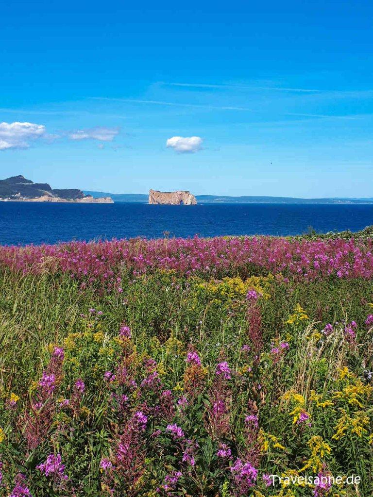 Blick über die Wildblumenwiesen auf den Rocher Percé