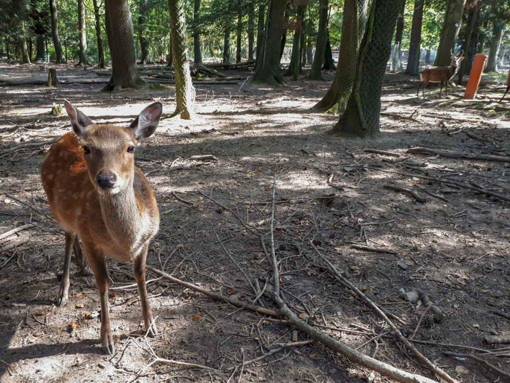Rehe im Wildpark Pforzheim, einer der beliebtesten Pforzheim Aktivitäten