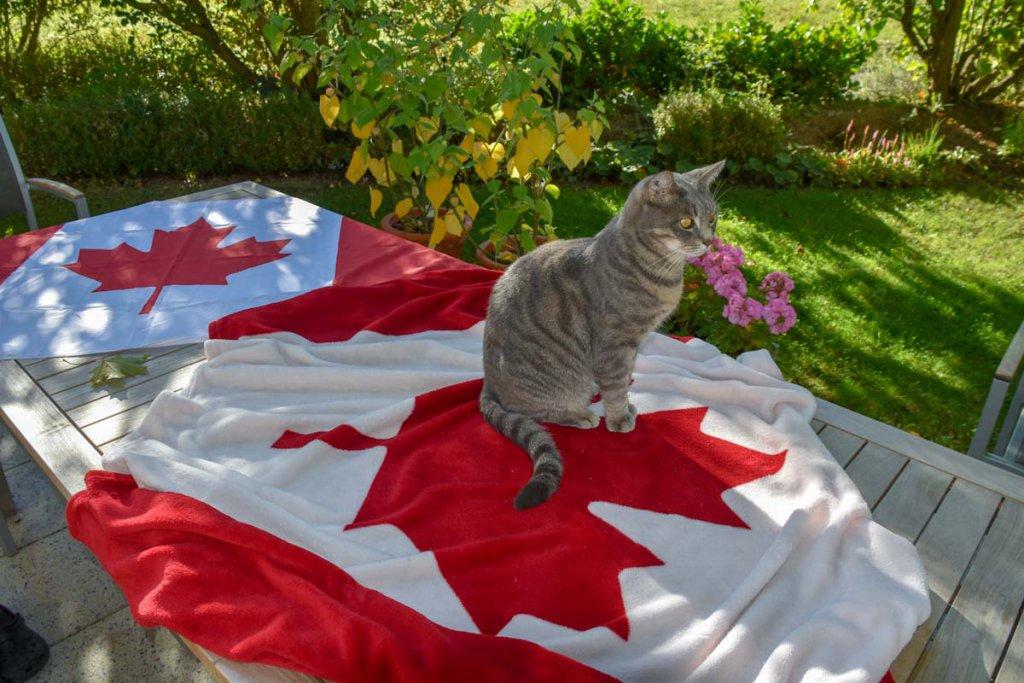 Typische Kanada Geschenke mit dem Ahornblatt