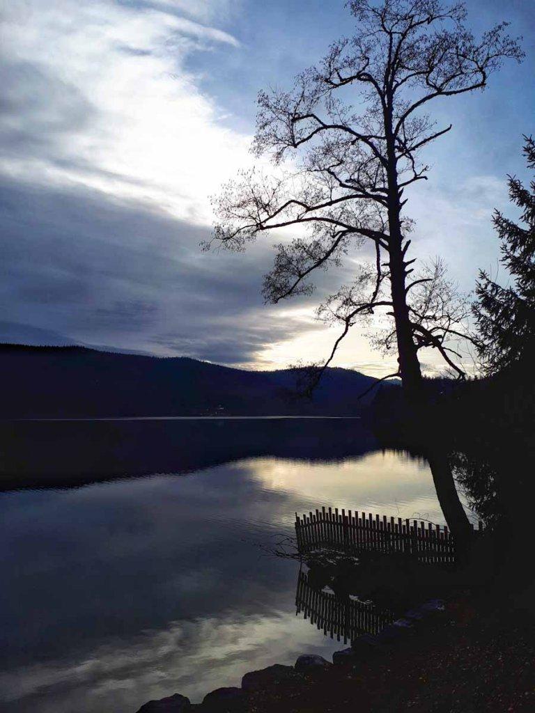 Dunkel und mystisch: Der Titisee im Schwarzwald im Winter