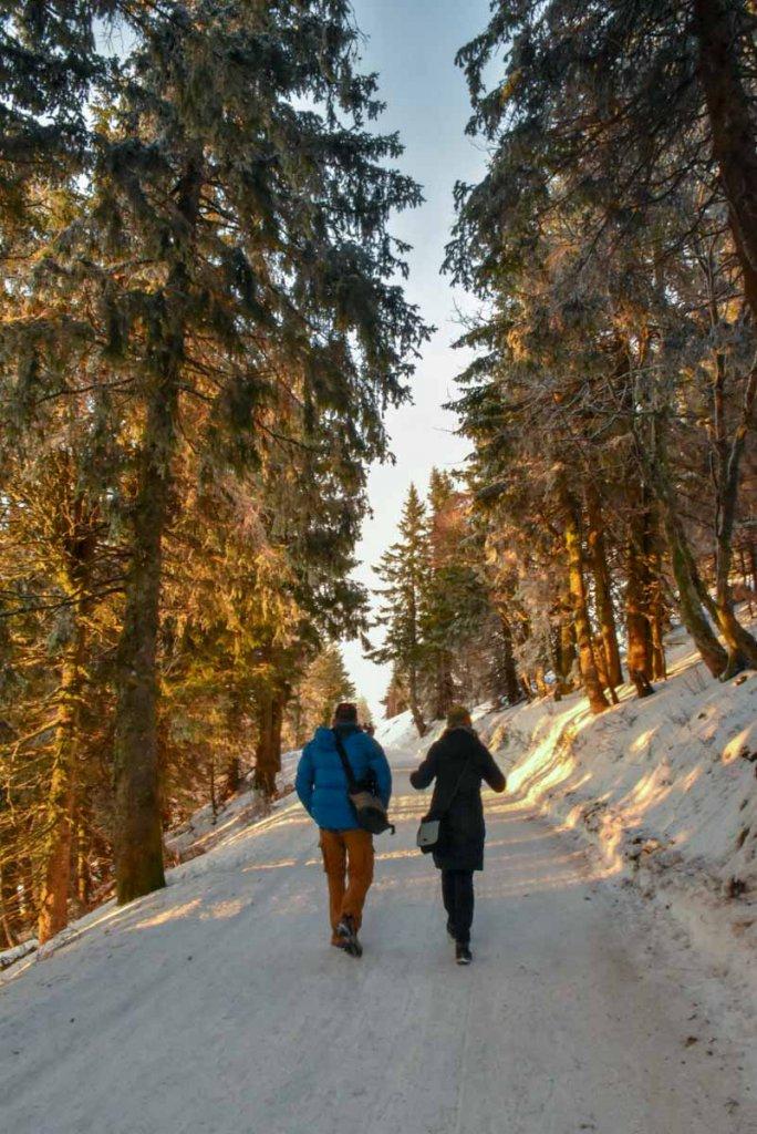 Winterwanderung auf dem Feldberg-Panoramaweg zum Gipfel des höchsten Bergs im Schwarzwald