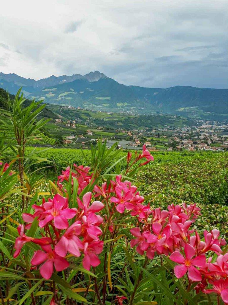 Jahresrücklick 2019: Wandern udn Genuss im Meraner Land in Südtirol