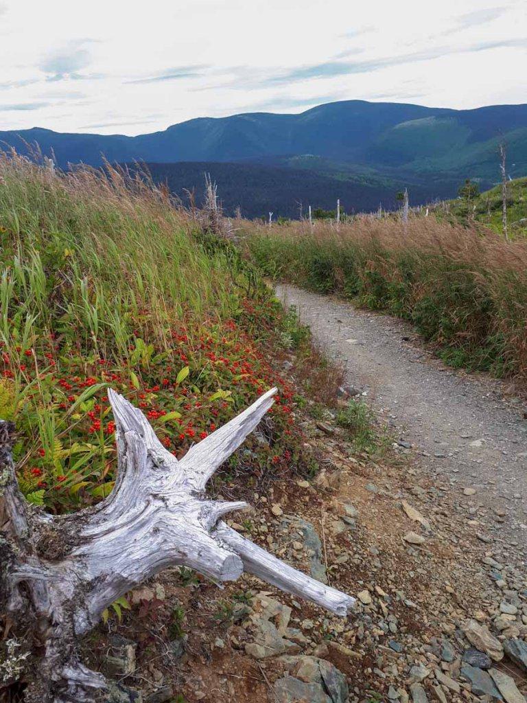 Wandern in den unberührten Chic Choc Mountains im Gaspésie Nationalpark