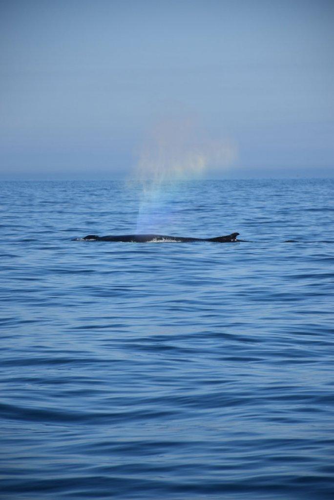 Beim Whale Watching in Kanada