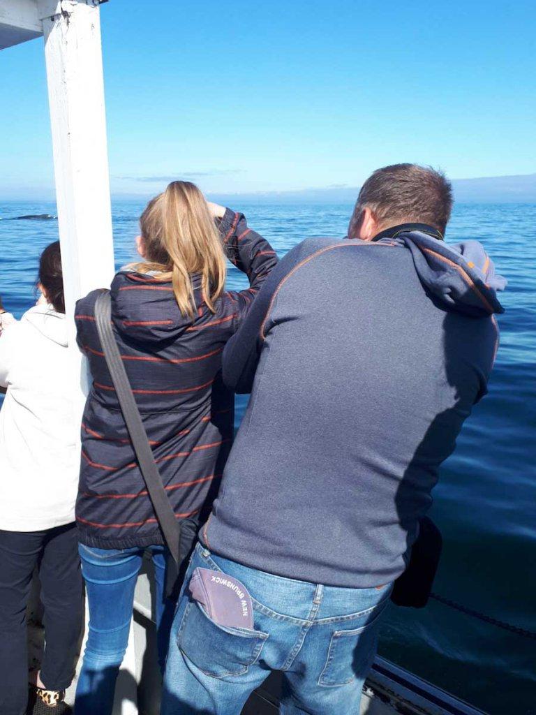 Wale sehen und fotografieren in Kanada