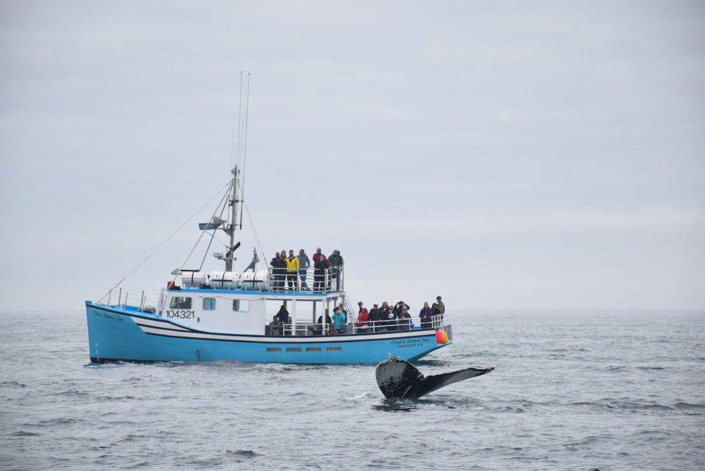 Unsere erste Walsichtung in der Bay of Fundy in Ostkanada