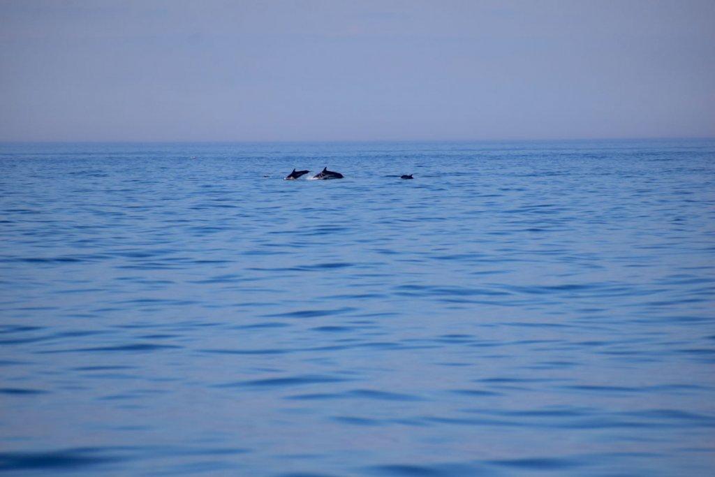 Delfine krönen unser Whale Watching Abenteuer in Ostkanada