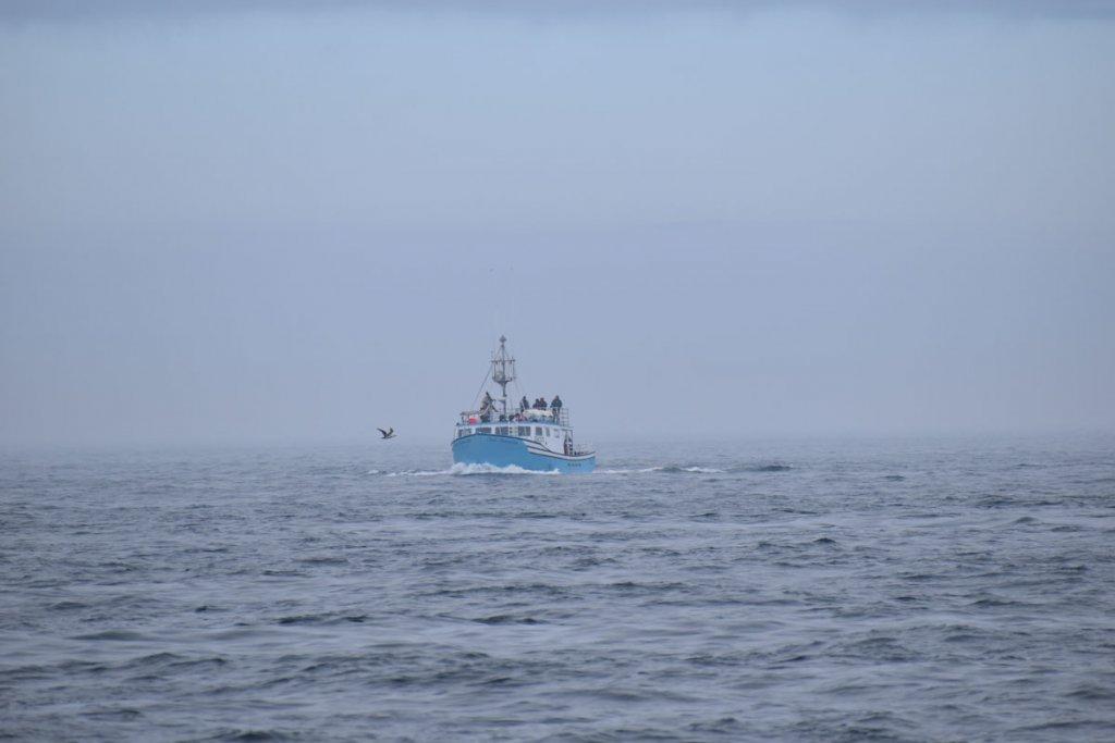 Walbeobachtung im dichten Nebel in der Bay of Fundy