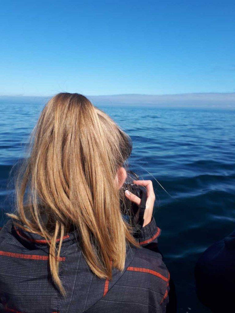 Unsere Fotografin im Glück: Über 40 Buckelwale, Delfine, Puffins und Robben vor der Linse!