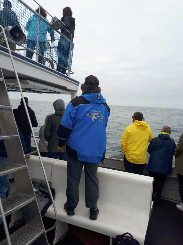 Whale Watching auf Brier Island mit Naturführer