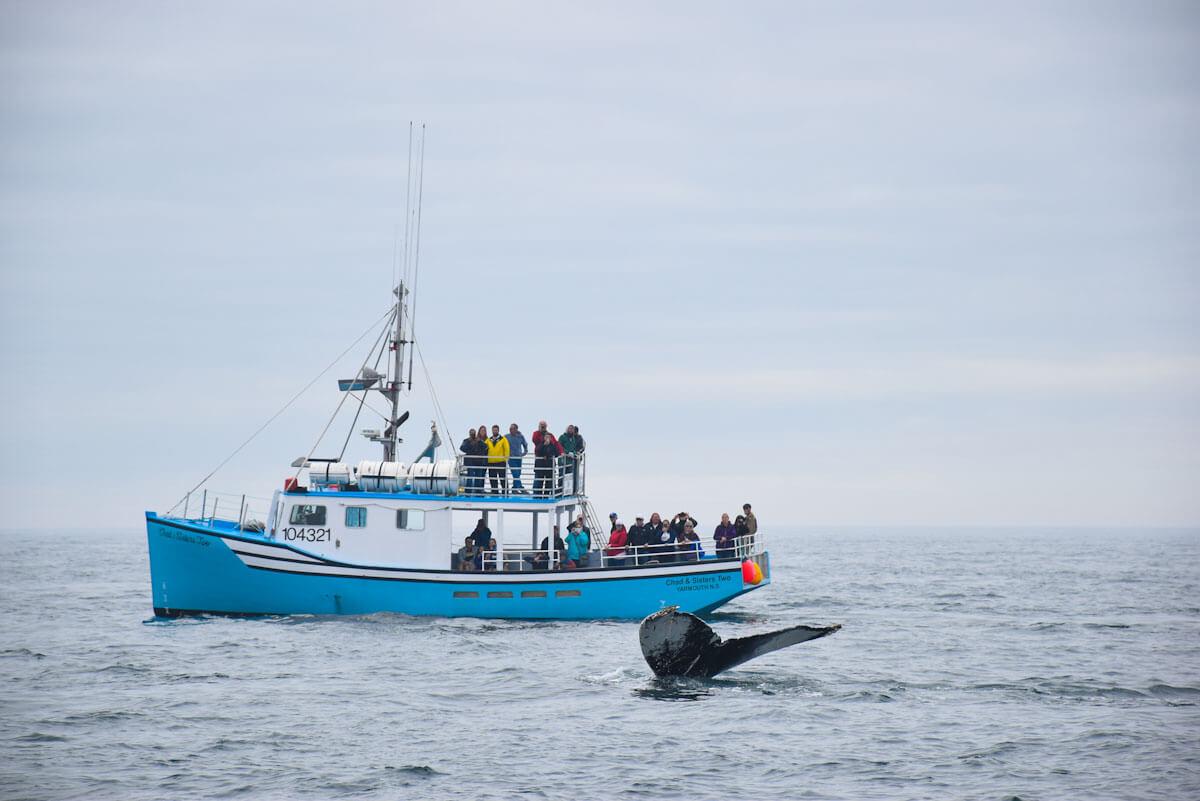 Whale Watching in Kanada: Wale beobachten in Ostkanada mit Kindern