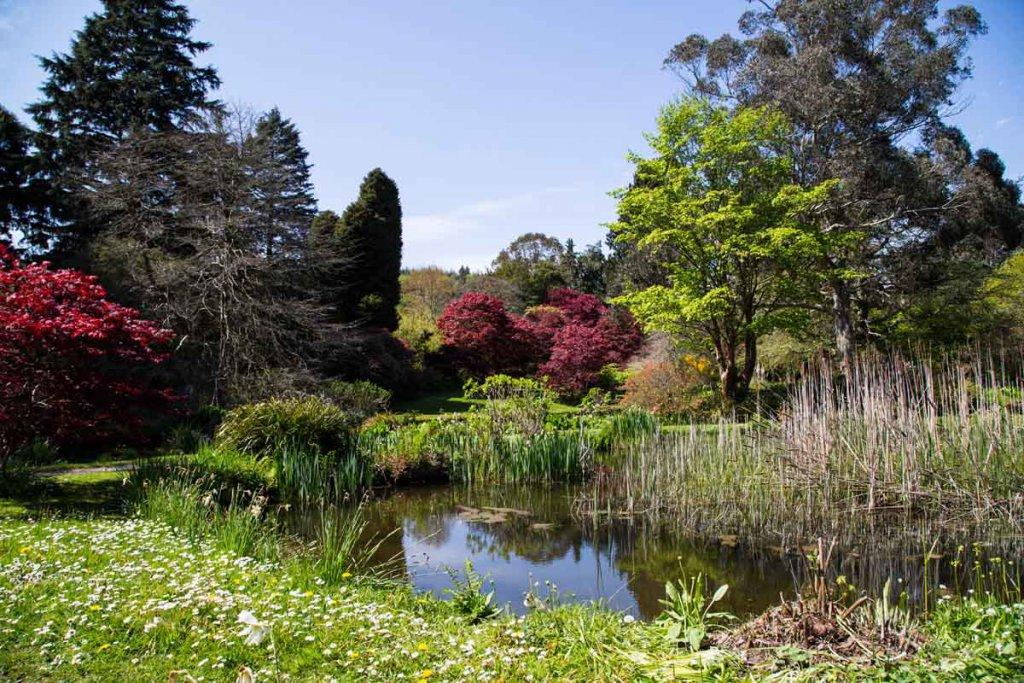 Irland-Tipp für Gartenfans: Die Mount Usher Gardens in Wicklow