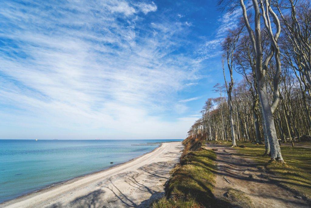 Der mystische Gespensterwald von Nienhagen an der Ostsee