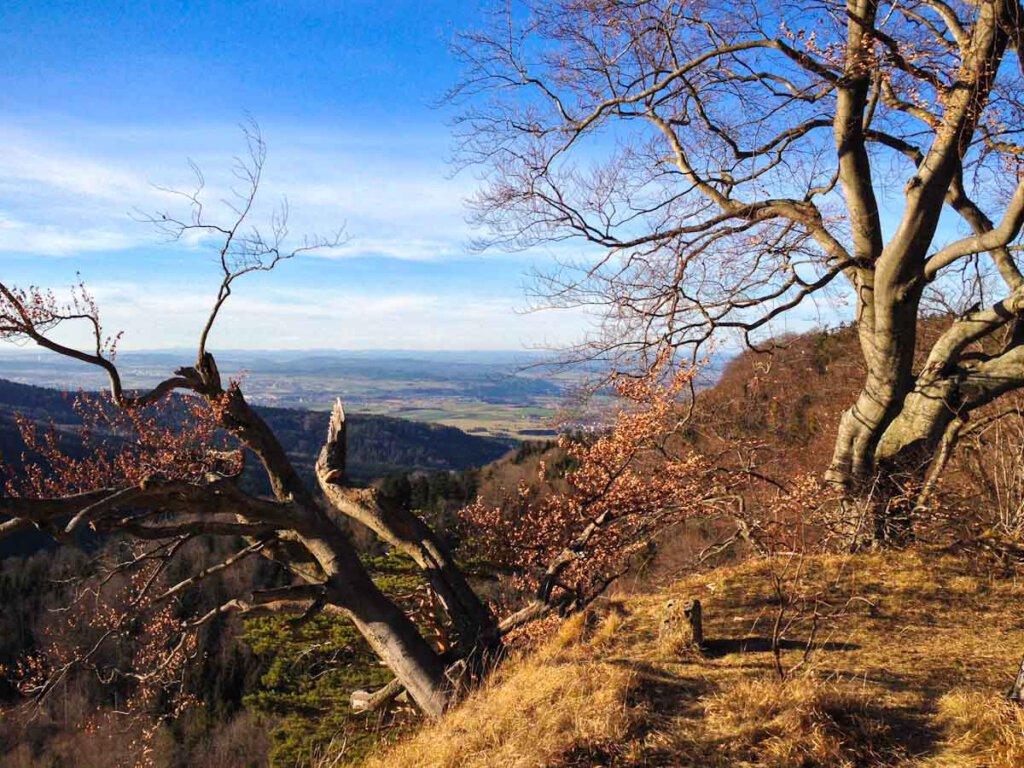 Schwäbische Alb Wanderung Traufgang Zollernburg Panorama