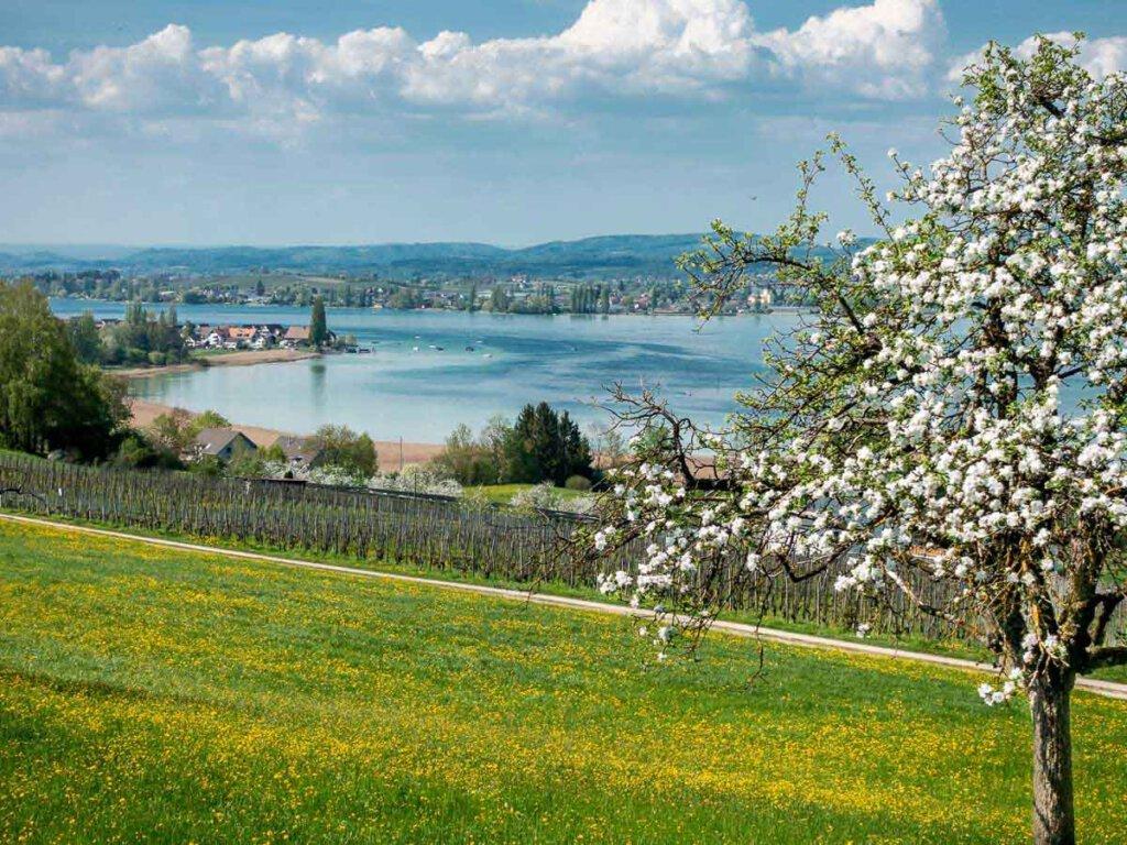 Frühling im schweizerischen Thurgau am Bodensee
