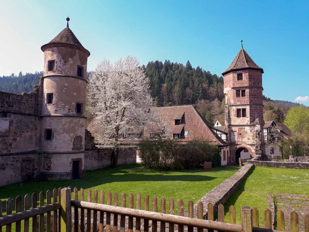 Kloster Hirsau im Frühling