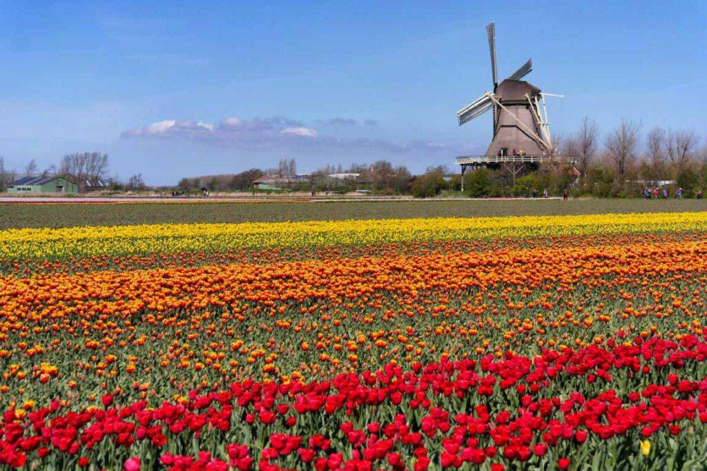 Schönste Reiseziele Europas: Tulpenfelder & Windmühlen in Holland