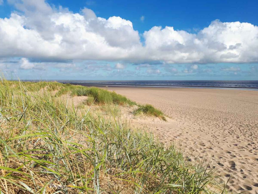 Natur pur an der Nordseeküste in Zeeland