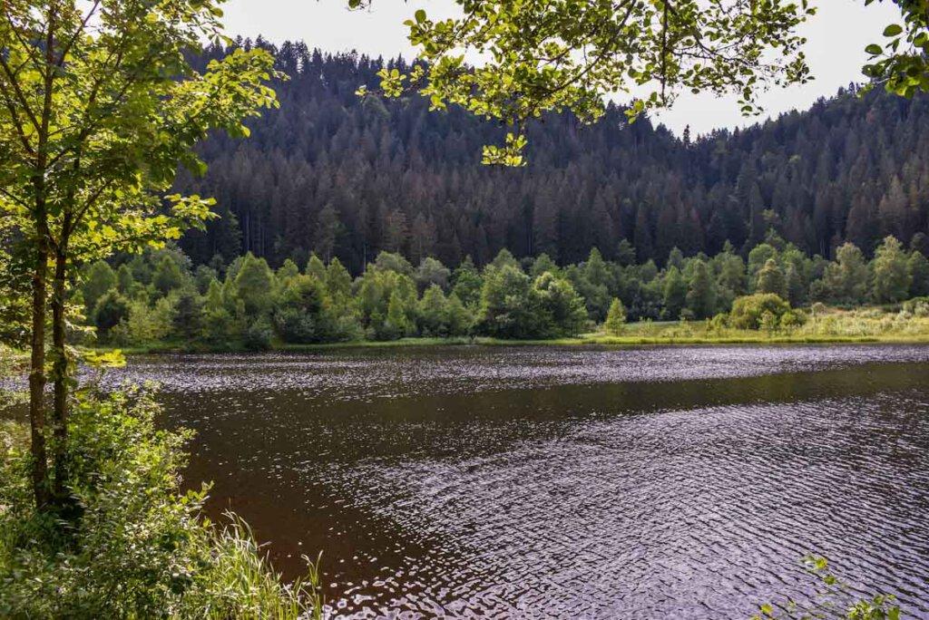 Schwarzwald Seen: Der Sankenbachsee bei Baiersbronn