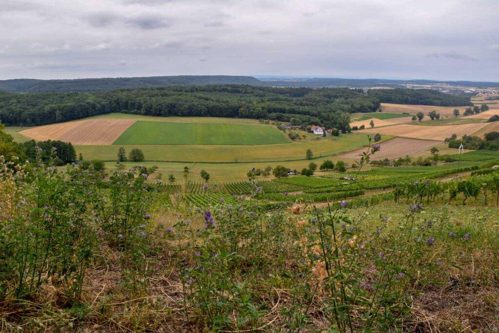 Auf dem Badischen Weinradweg durch die sanften Hügel des Kraichgaus