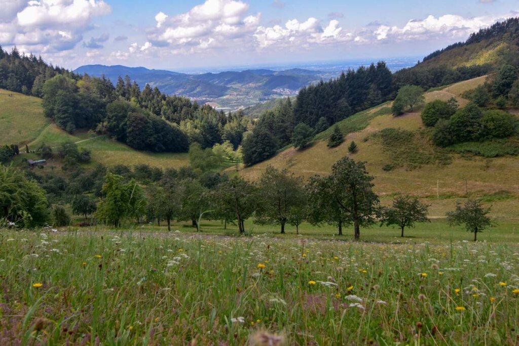 Genusswandern im Renchtal im Schwarzwald