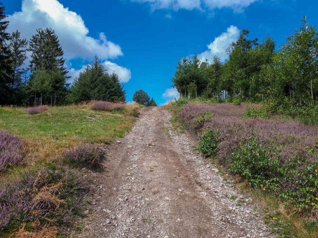 Die Heide blüht auch im Schwarzwald