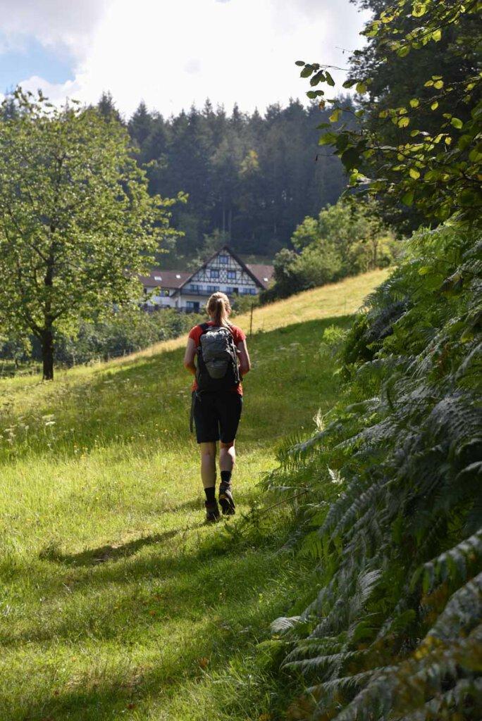 Naturerlebnis pur beim Wandern im Schwarzwald