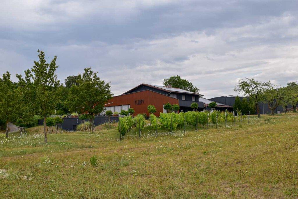Ausgezeichnete Architektur: Weingut Klumpp in Bruchsal