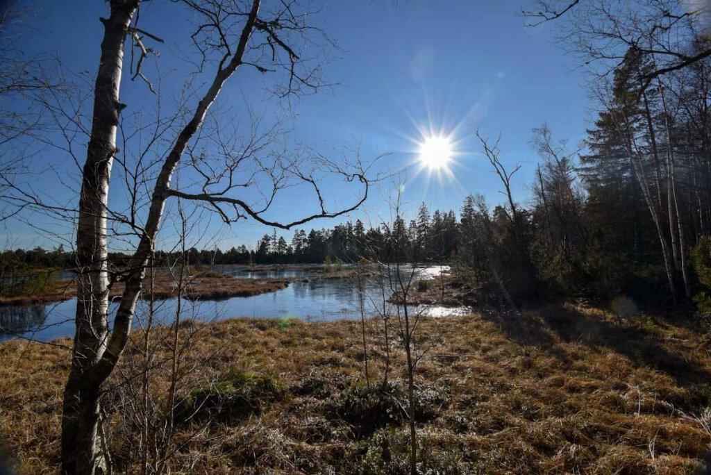 Naturparadies: Das Wildseemoor auf dem Kaltenbronn