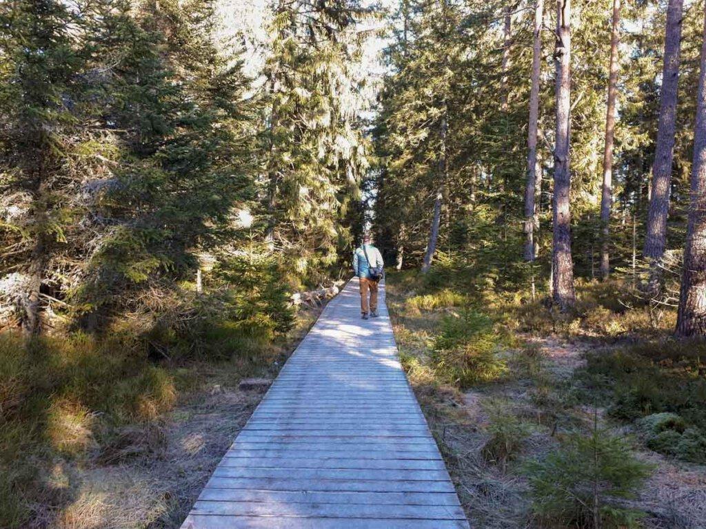 Vorsicht eisig: Der Holzbohlenweg durch das Wildseemoor auf dem Kaltenbronn